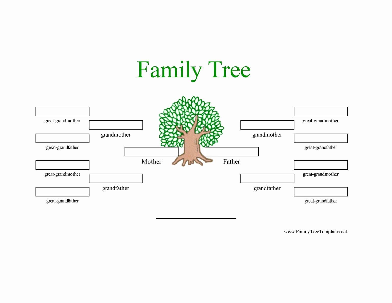 3 Generation Family Trees Elegant Family Tree Template Family Tree Template 3 Generations with Siblings