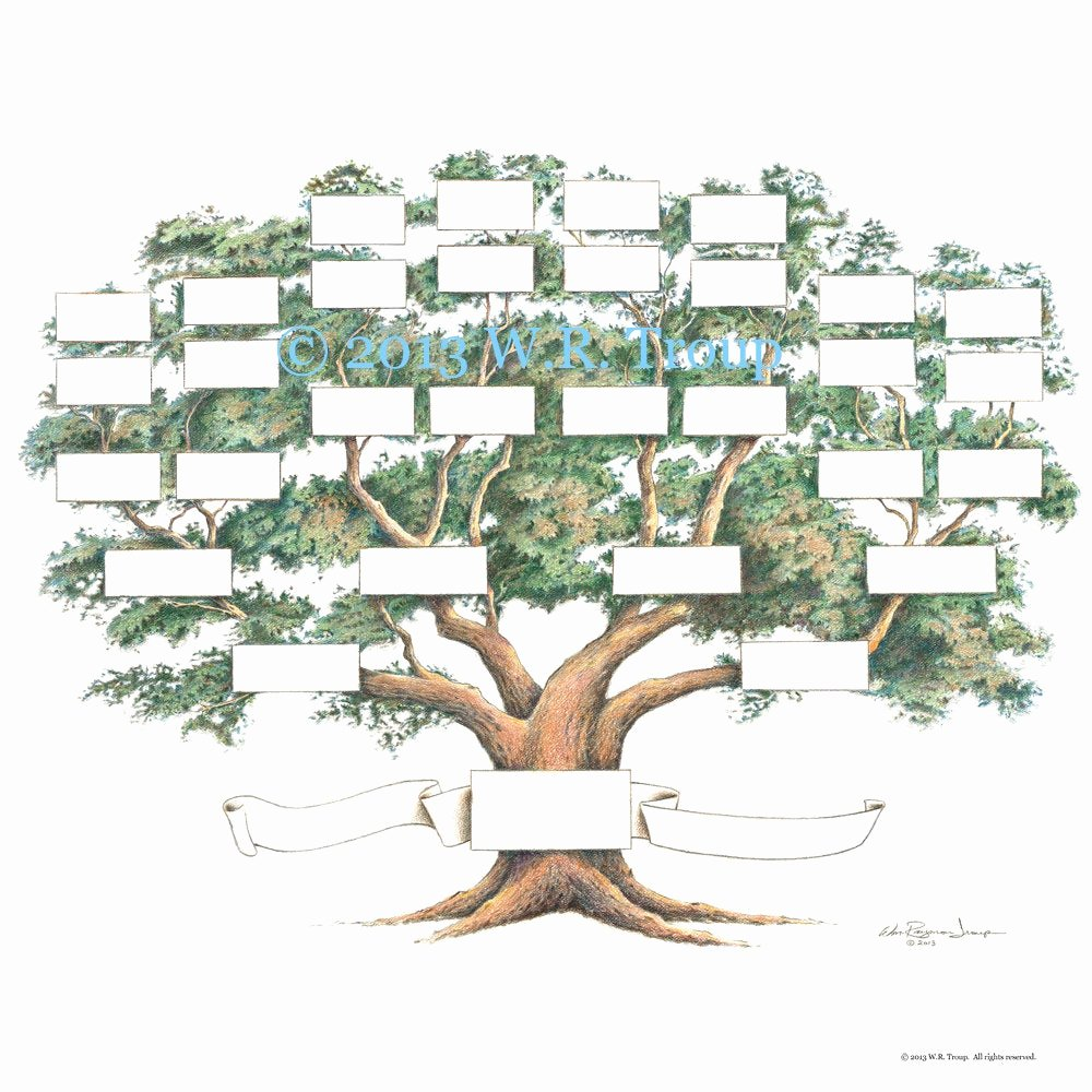 4 Generation Pedigree Chart Elegant Family Tree Scrapbook Chart 12x12 Inch 5 6 Generations