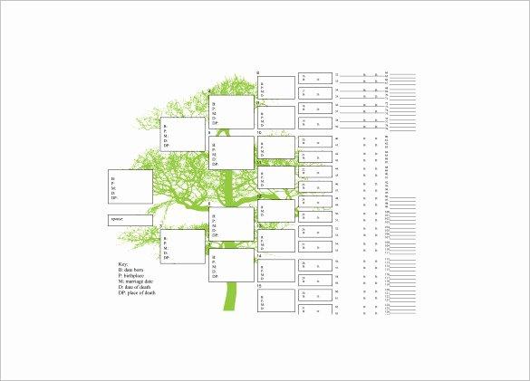 7 Generation Family Tree Template Beautiful Seven Generation Family Tree Template – 9 Free Word