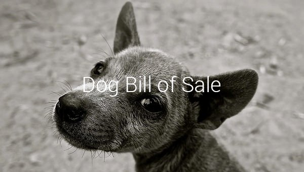 Bill Of Sale Dog Inspirational Dog Bill Of Sale – 8 Free Sample Example format