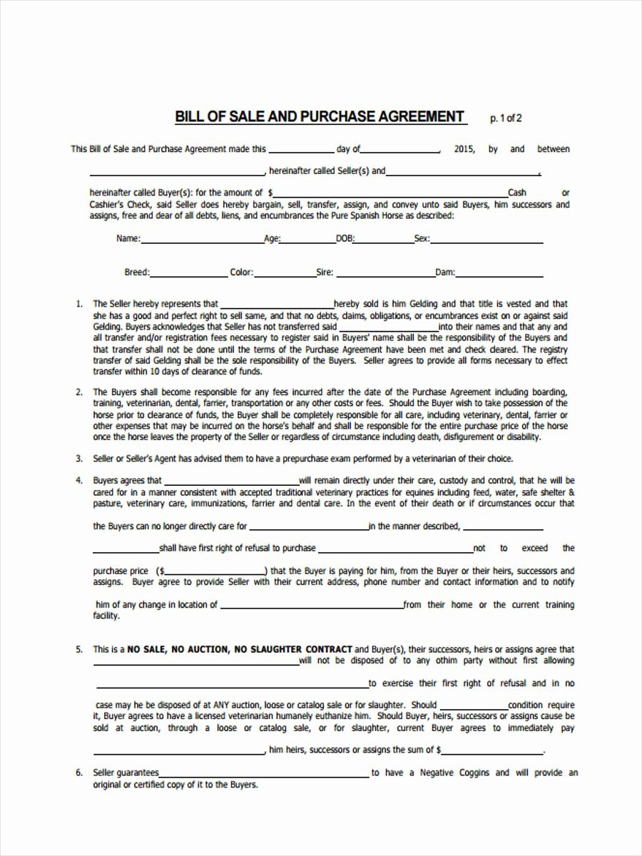 Bill Of Sale Horse Lovely Free 6 Horse Bill Of Sale form In Sample Example format