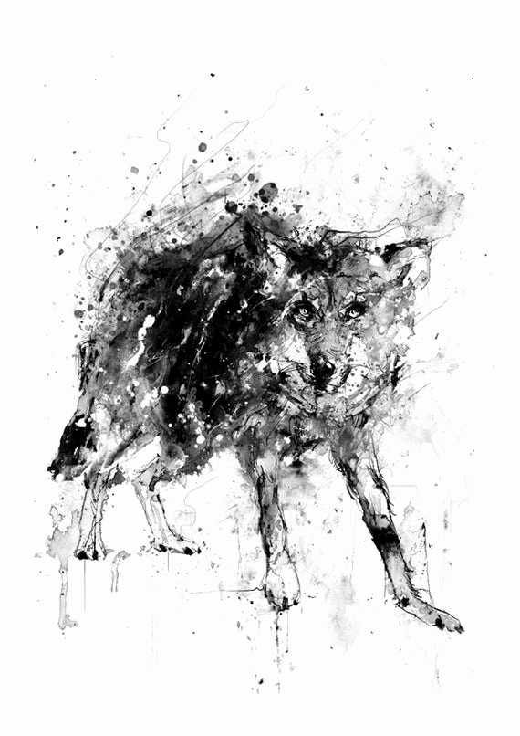 Black and White Drawings Inspirational Black Wolf Black and White Print Ink Drawing Animal Art
