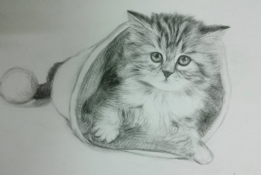 Black and White Drawings Lovely 19 Cat Drawings Art Ideas Sketches