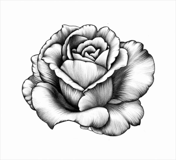 Black and White Flower Drawing Awesome 17 Beautiful Flower Drawings Vector Eps Jpg Download