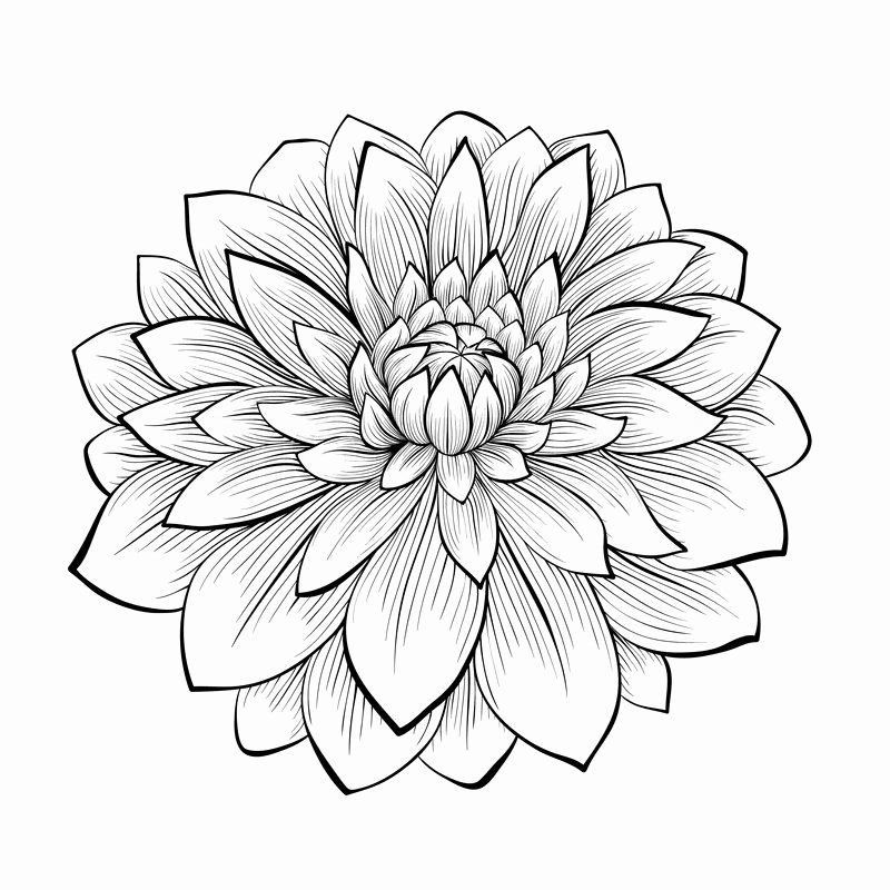Black and White Flower Drawing Best Of Beautiful Monochrome Black and White Stock Vector