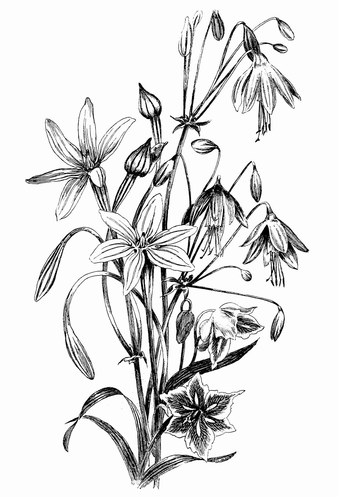 Black and White Flower Drawing Elegant Black and White Floral Drawing