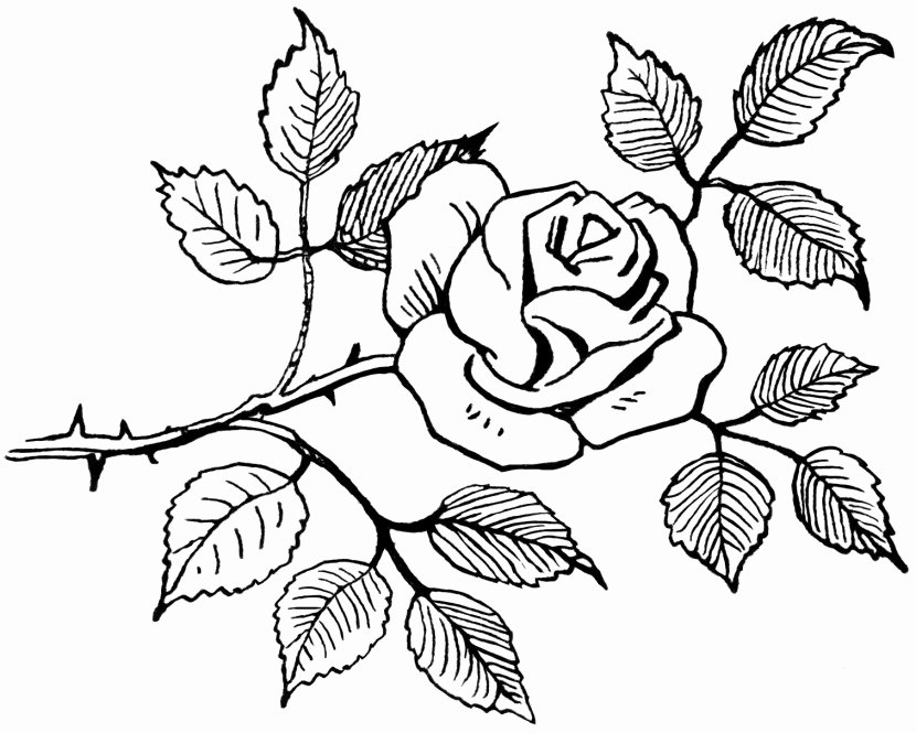 Black and White Flower Drawing New Flower Clipart Black and White Clipartion
