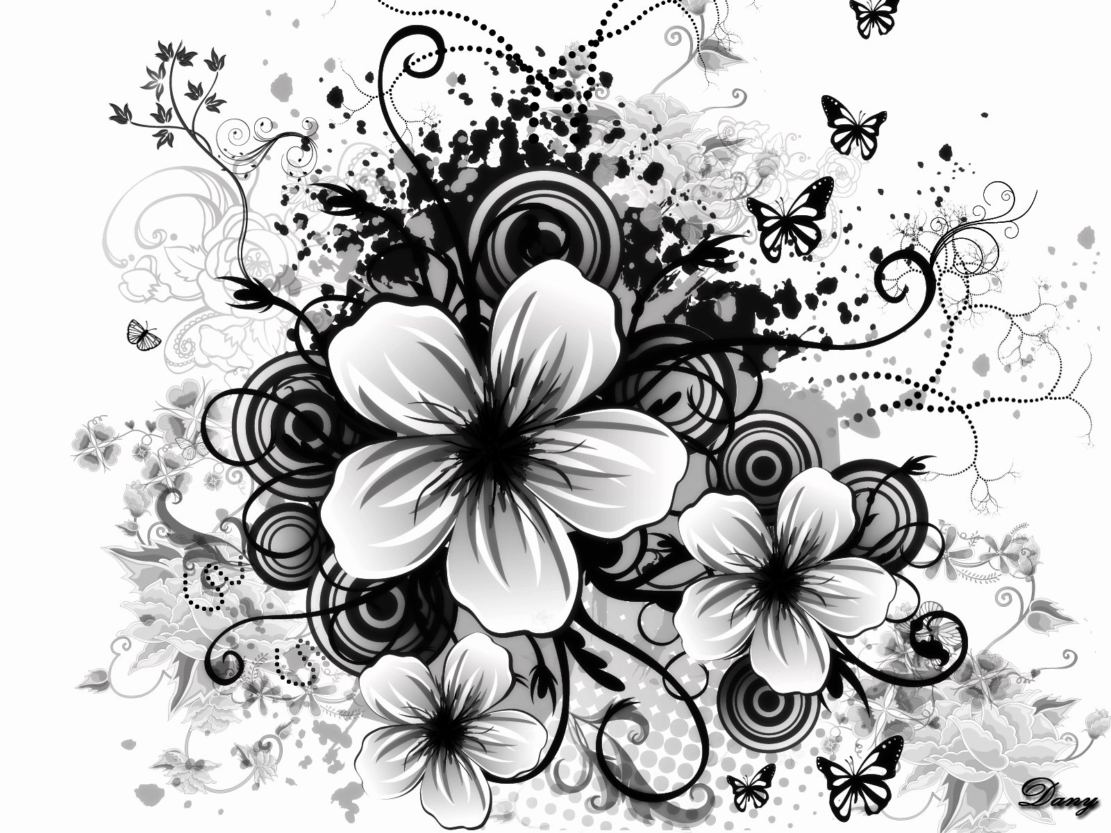 Black and White Flower Drawings Beautiful Black and White Flowers Wallpapers Hd