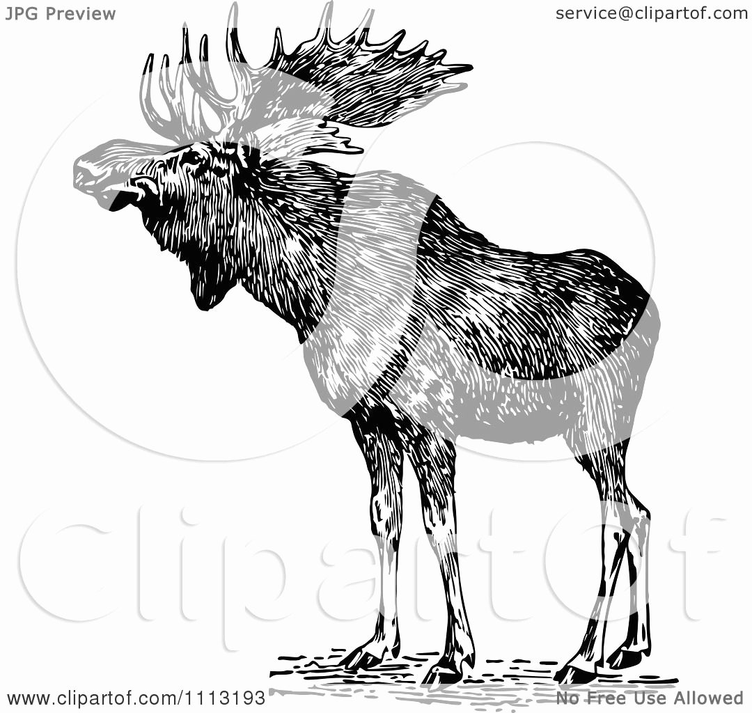 Black and White Illustration Awesome Clipart Vintage Black and White Wild Moose Royalty Free Vector Illustration by Prawny Vintage
