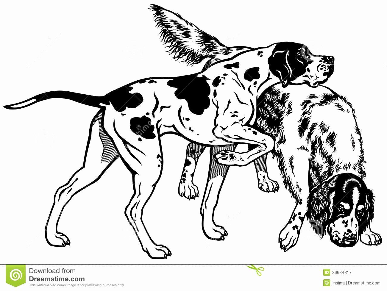 Black and White Illustration Awesome Pointer and Setter Black White Royalty Free Stock Graphy Image