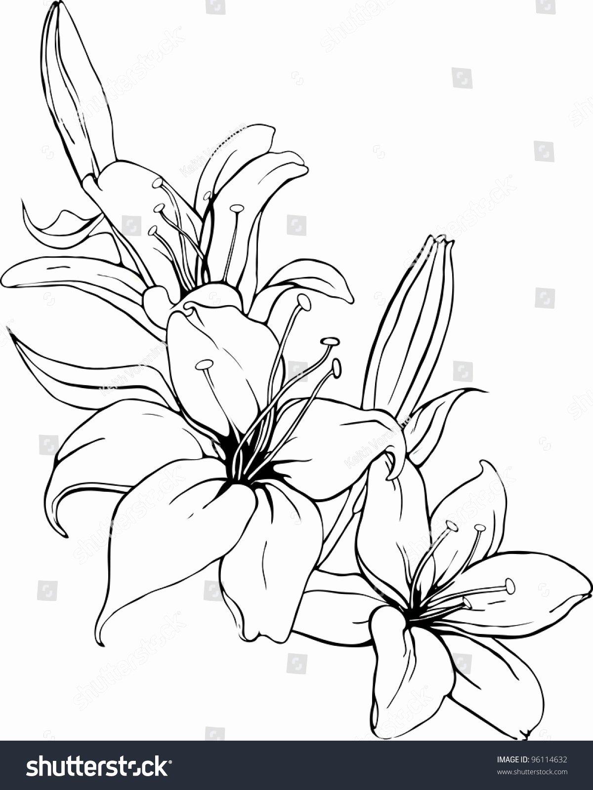 Black and White Illustration Elegant Vector Illustration Lily In Black and White Colors Shutterstock