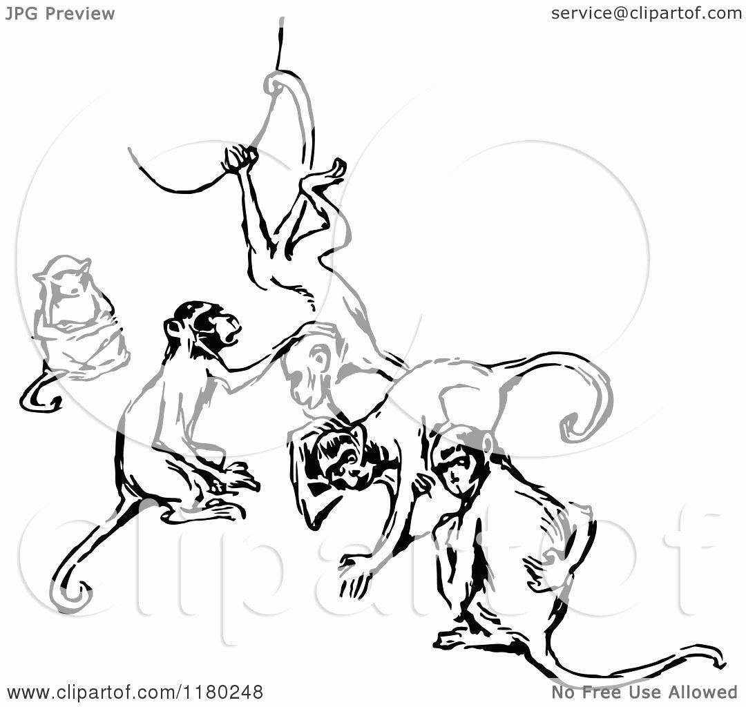 retro vintage black and white group of monkeys