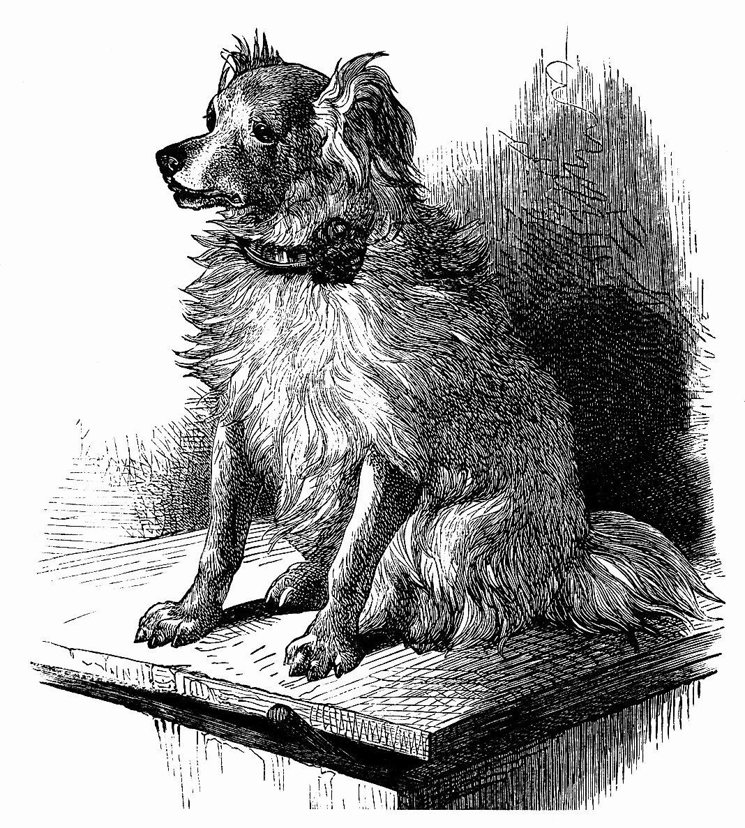 Black and White Illustration New Gordon Setter Dog Engraving Old Design Shop Blog