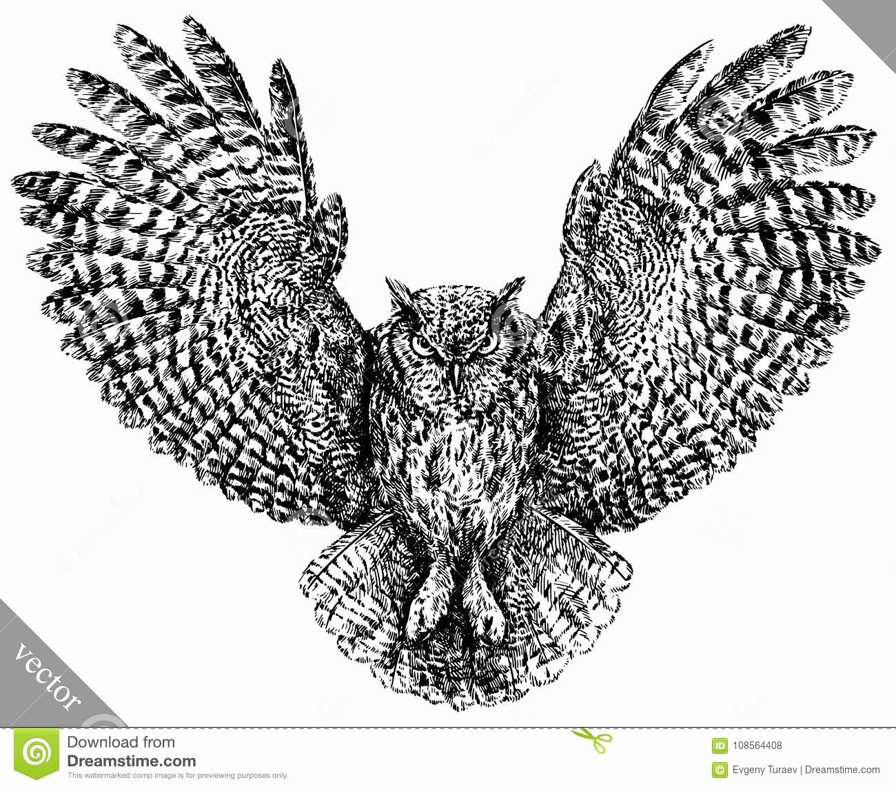 Black and White Illustration Unique Black and White Engrave isolated Owl Vector Illustration Stock Vector Illustration Of Black