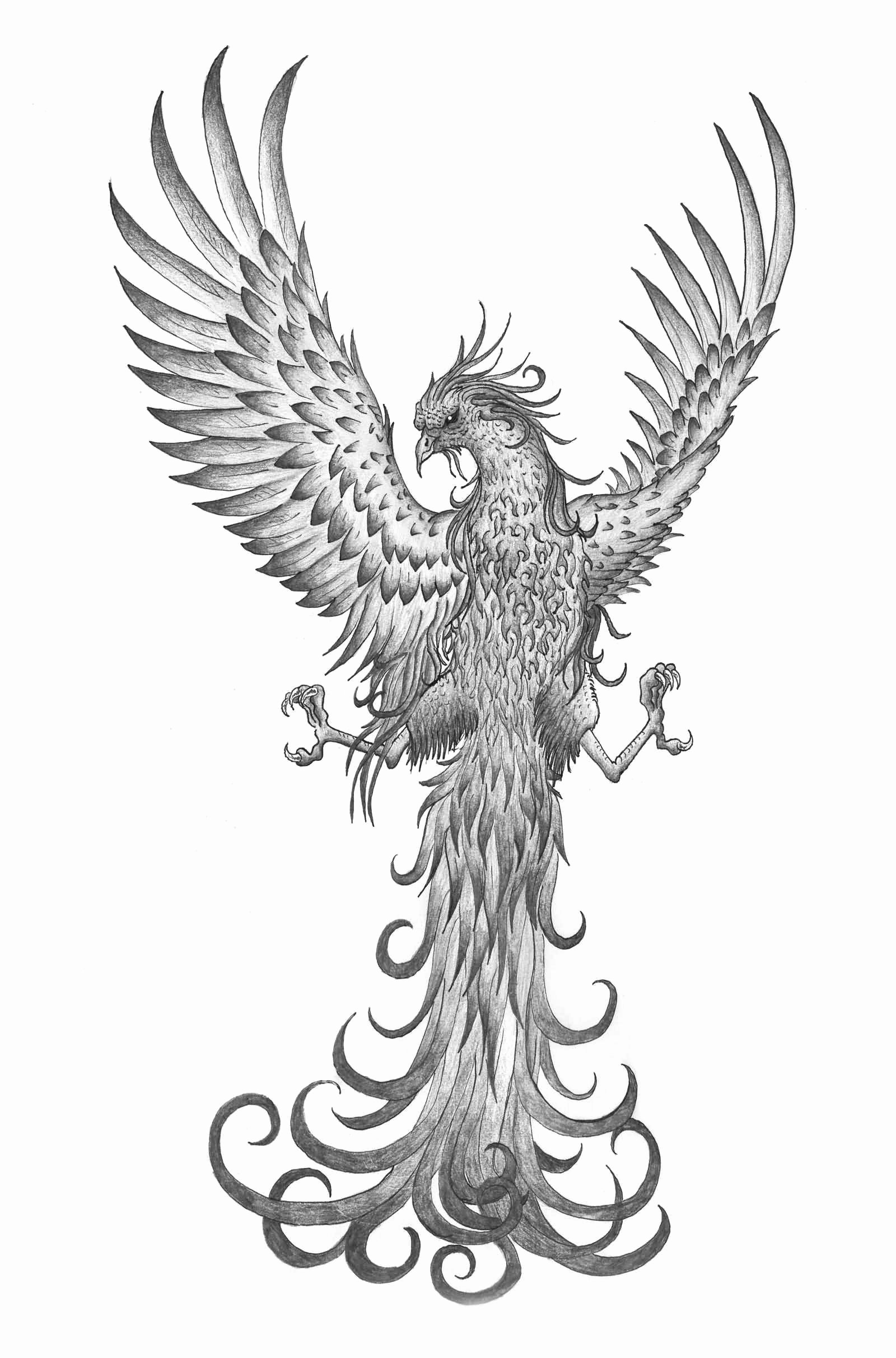 Black and White Phoenix Best Of 65 Best Flying Phoenix Tattoos & Designs with Meanings