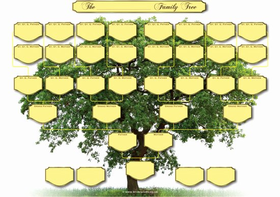 Blank Family Tree Book Luxury 5 Generation Family Tree Chart