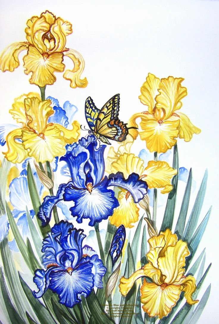 Butterfly and Flower Paintings Beautiful 151 Best Images About butterfly and Flower Paintings On Pinterest
