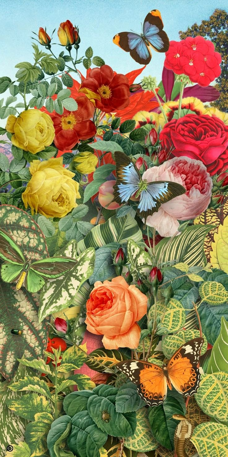 Butterfly and Flower Paintings Beautiful 762 Best Images About Pupurri De Cosas On Pinterest