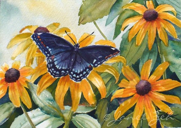 Butterfly and Flower Paintings Lovely Zeh original Art Blog Watercolor and Oil Paintings Painting A butterfly and Black Eyed Susan