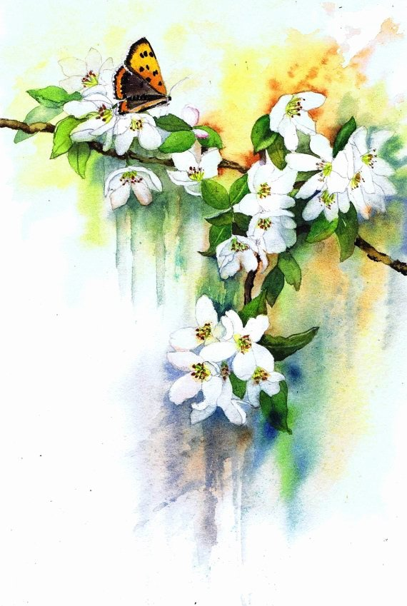 Butterfly and Flower Paintings Luxury 151 Best Images About butterfly and Flower Paintings On Pinterest