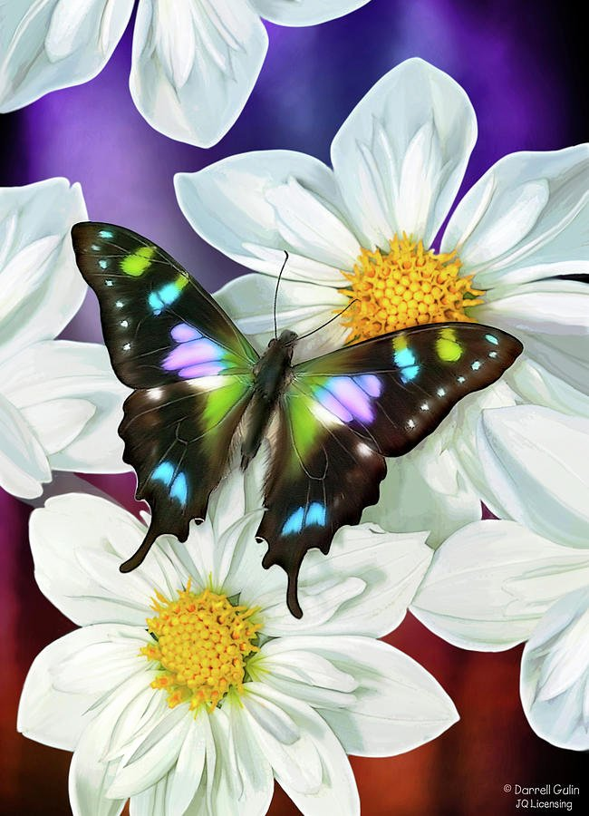 Butterfly and Flower Paintings Unique butterfly Flowers Painting by Jq Licensing