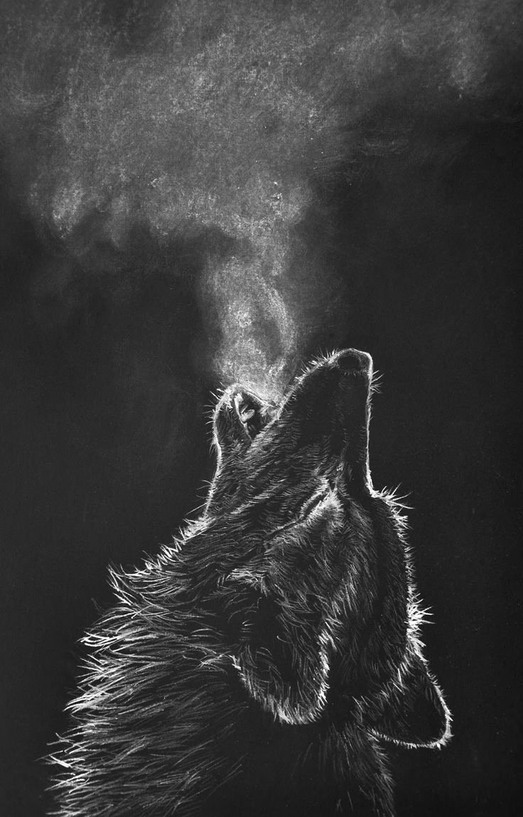 Draw Black and White Unique White Charcoal Drawing Black Paper Wolf Google Search Wolves Pinterest