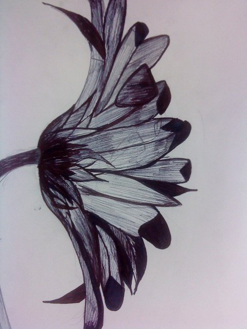 Drawings Of A Flower Awesome 21 Best Observational Drawing Art Ideas Images On Pinterest
