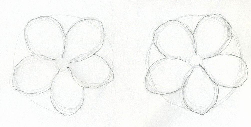 Drawings Of A Flower Awesome Scarlet Pimpernel Flower Drawing Lesson
