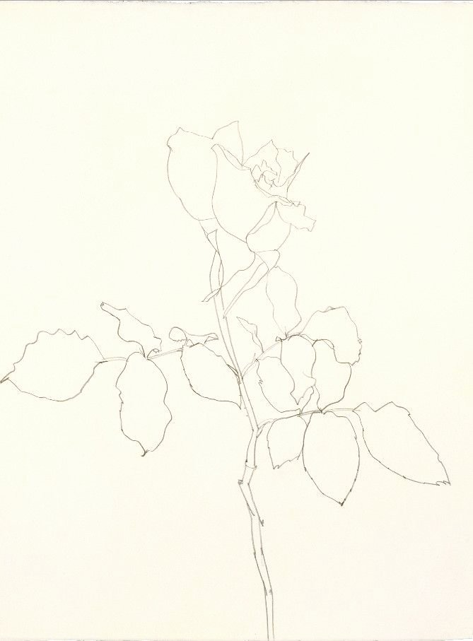 Drawings Of A Flower Best Of American Artist Ellsworth Kelly Exhibits His Flower and Plant Drawings In New York