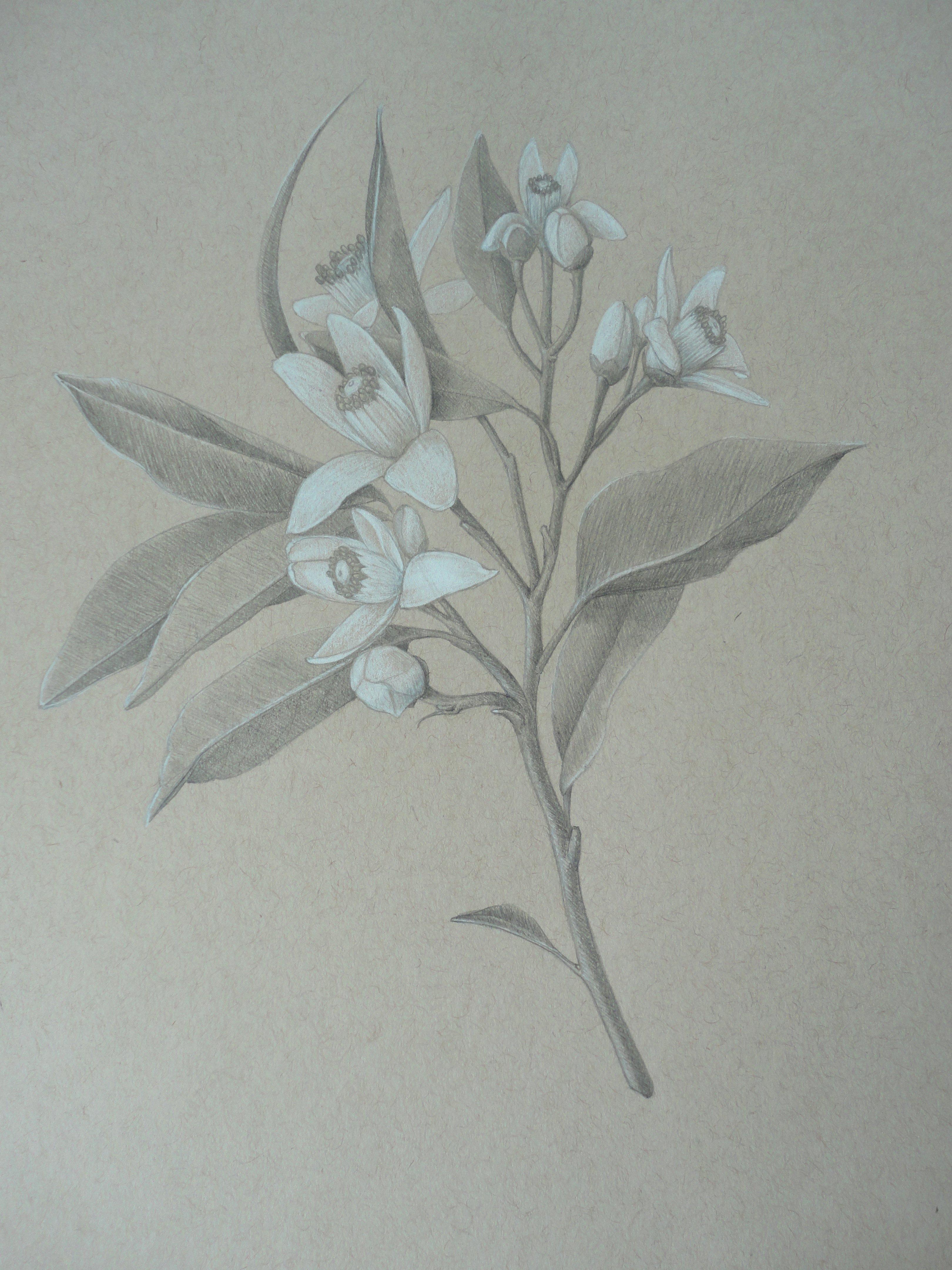 Drawings Of A Flower Elegant Drawings