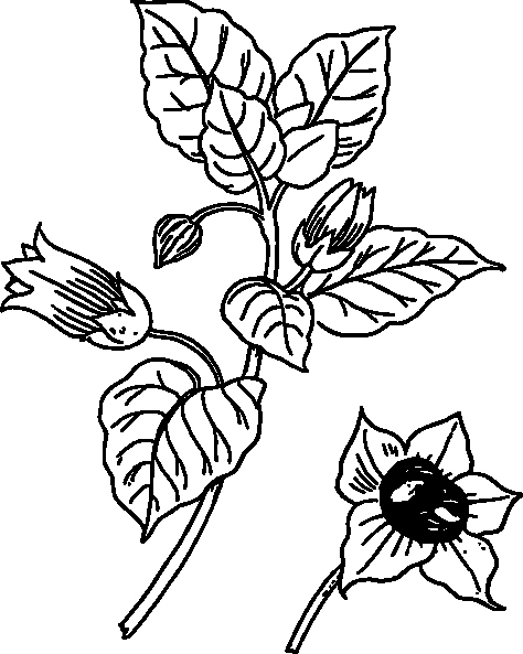 Drawings Of A Flower Fresh Flower Coloring Pages