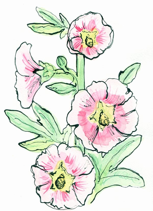 Drawings Of A Flower Inspirational Embletree Flower Drawings