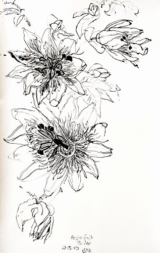 Drawings Of A Flower New Christian Peltenburg Brechneff Passion Fruit Flower Drawings