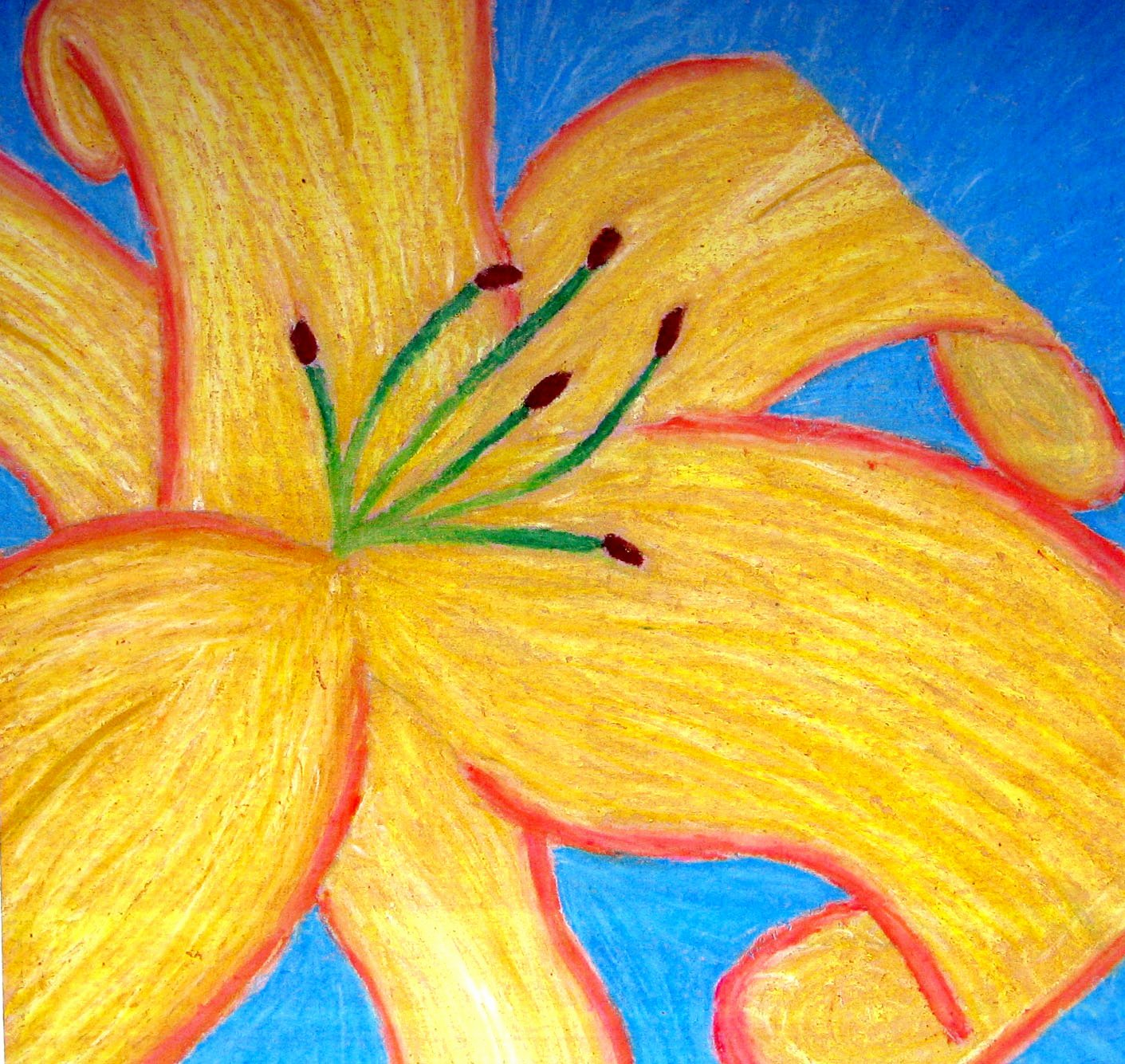 Drawings Of A Flower Unique Georgia Okeeffe Flower Drawings