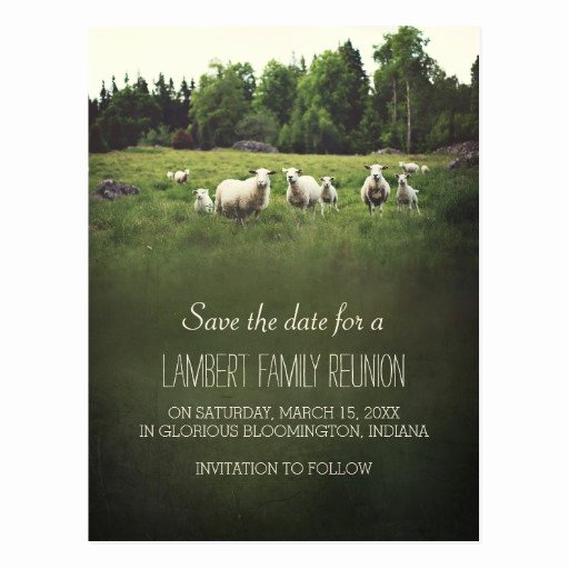 Family Reunion Save the Date Awesome Sheep On Pasture