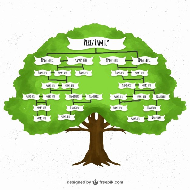 Family Tree Examples Images Unique Watercolor Family Tree Vector