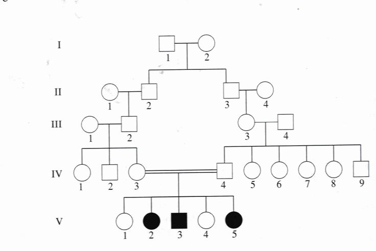 Family Tree Template Google Docs Best Of Genetic Family Tree Template Google Search