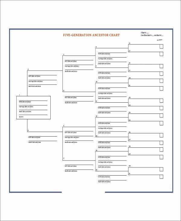 Family Tree Worksheet Pdf Unique Sample Blank Family Tree 8 Examples In Word Pdf