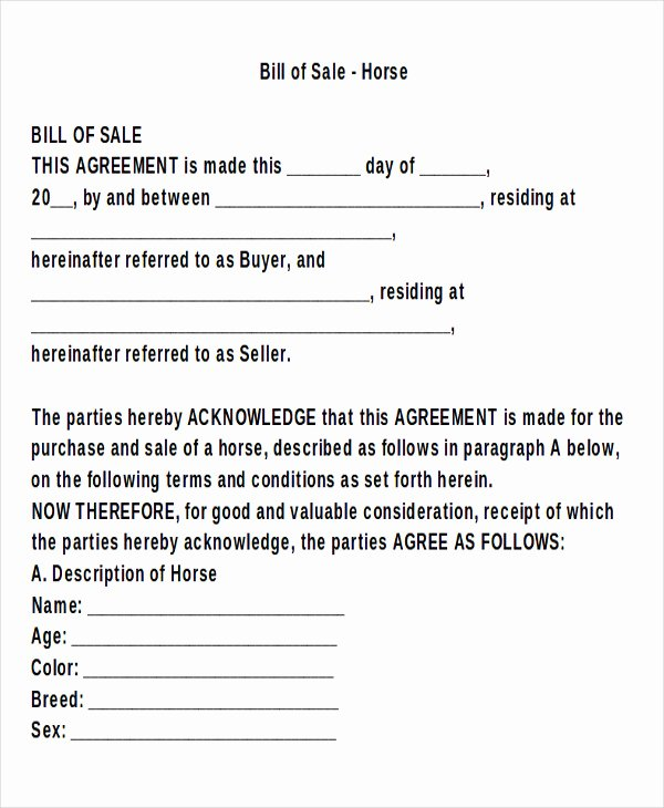 Horse Bill Of Sale form New 9 Horse Bill Of Sale Examples In Word Pdf