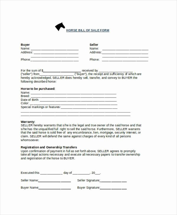 Horse Bill Of Sale Inspirational Free 36 Bill Of Sale forms In Word