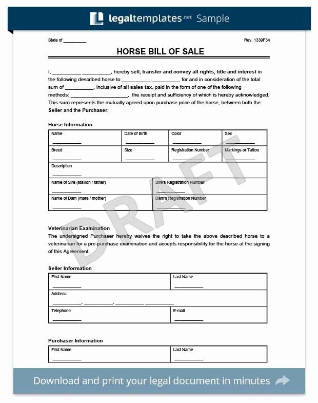 Horse Bill Of Sale Pdf Awesome Create A Firearm Bill Of Sale form