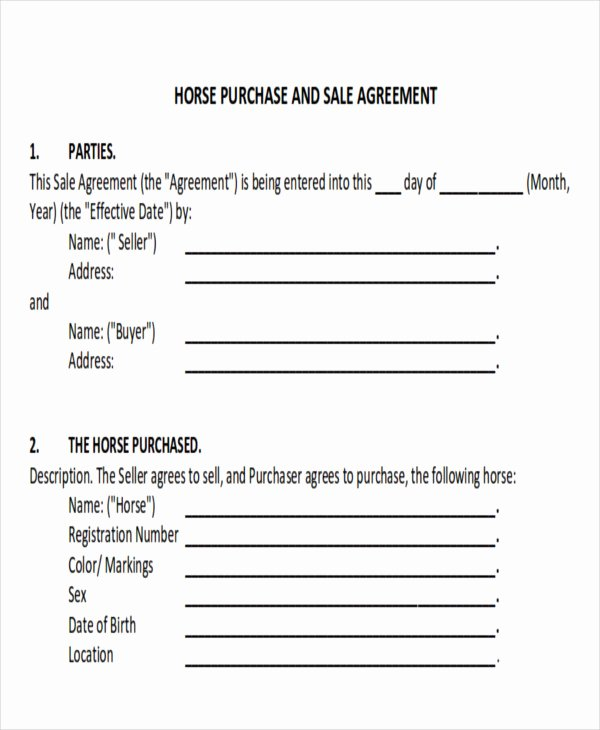 Horse Bill Of Sale Pdf Beautiful 9 Horse Bill Of Sale Examples In Word Pdf