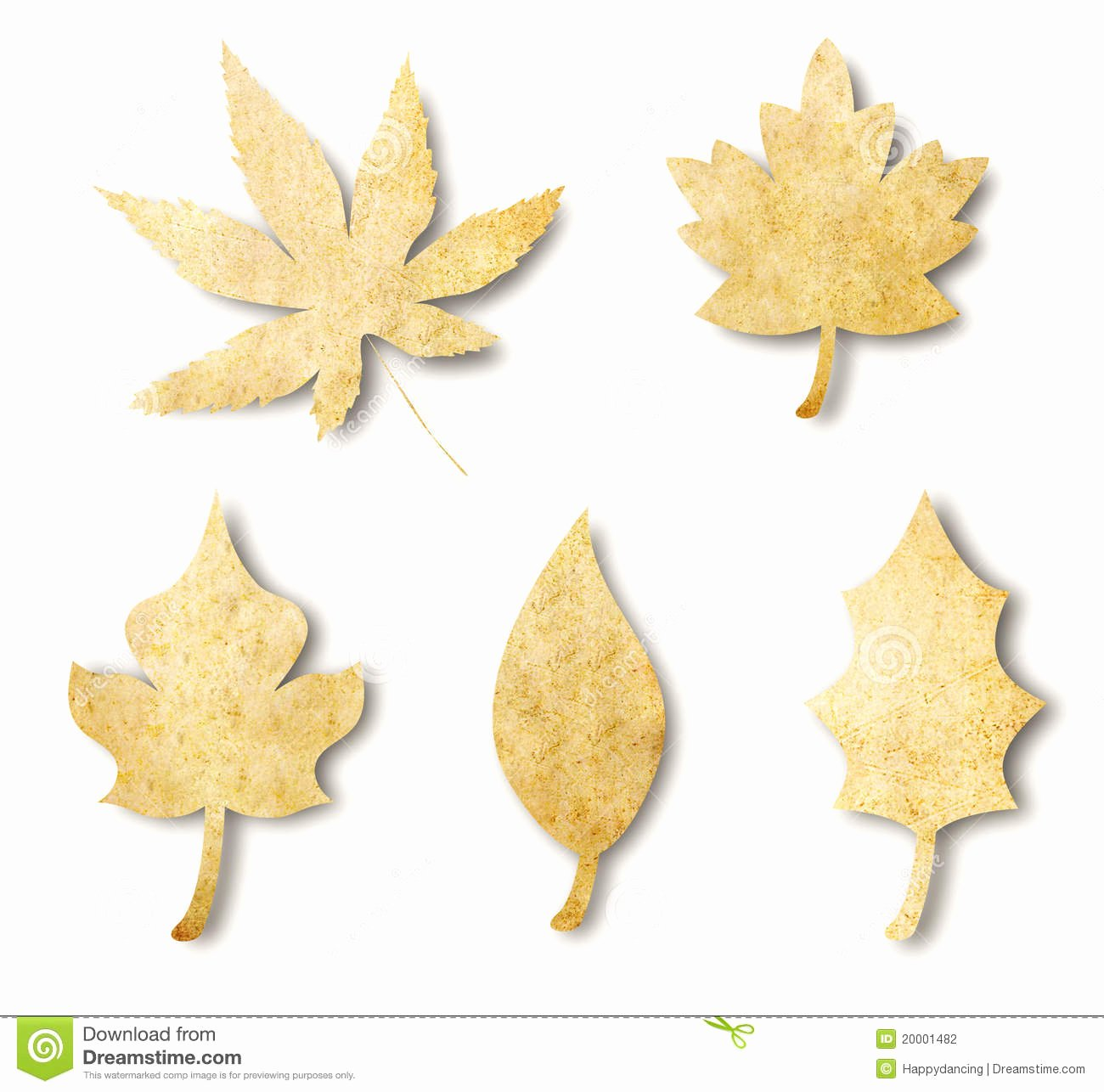 Leaf Shaped Business Cards Fresh Various Leaf Shape From Paper Stock Graphy Image