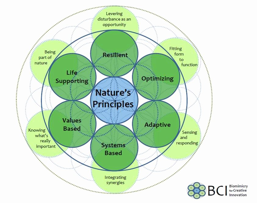 Nature Of Business Example Unique the Nature Of Business – A New Business Paradigm