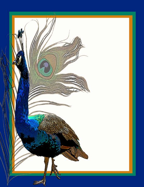 Peacock Invitations Template Free New Peacock Invitation Template 2 Free Stock Public Domain