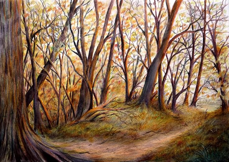 Pencil Sketches Of Nature Best Of Colour Pencil Sketches Nature Woodland Pencil Sketch Sketch Pinterest