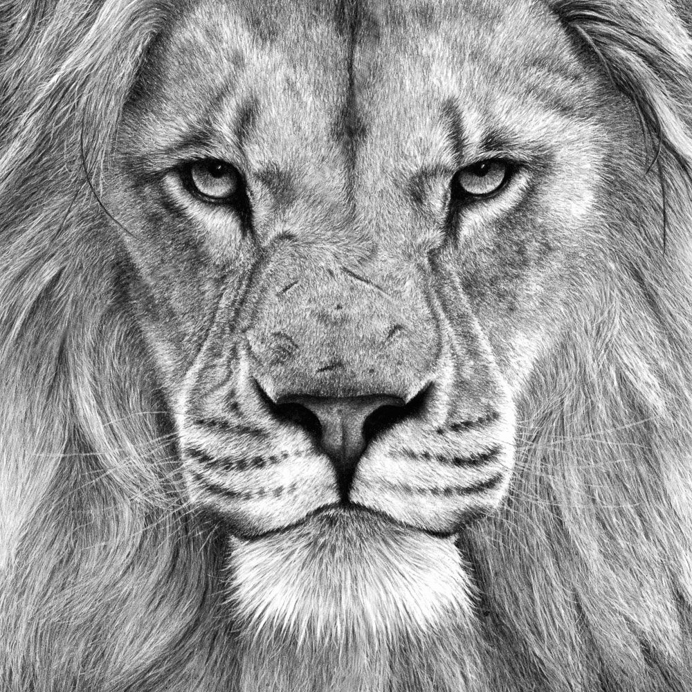 Pencil Sketches Of Nature Lovely Charcoal & Charcoal Pencil Drawing Nature In Art