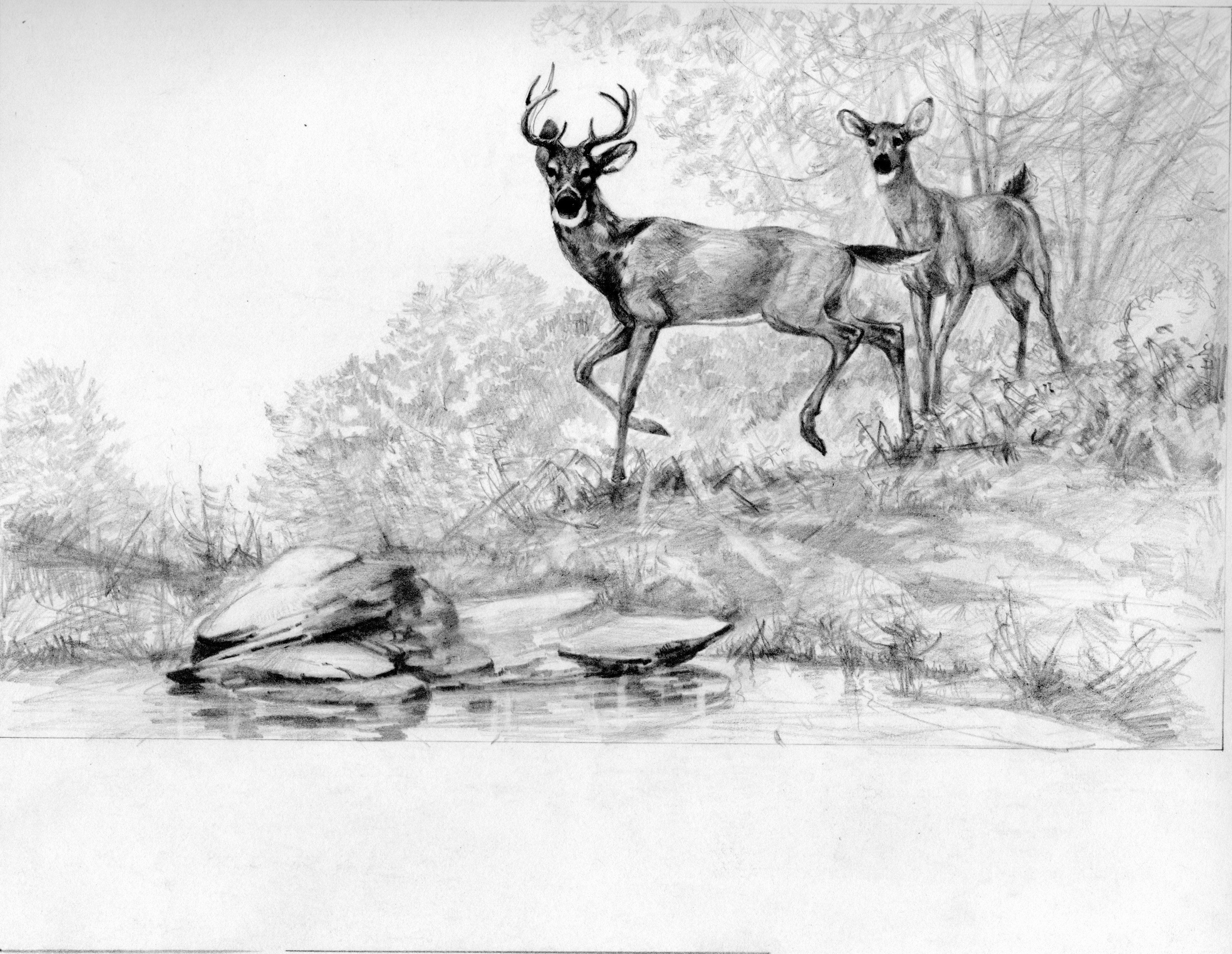 Pencil Sketches Of Nature Lovely Pencil Drawings Wildlife Nature Pencil Drawings