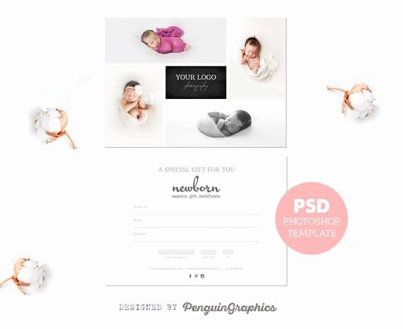 Photo Session Gift Certificate Fresh Gift Certificate Template Graphy Mini Session T Card