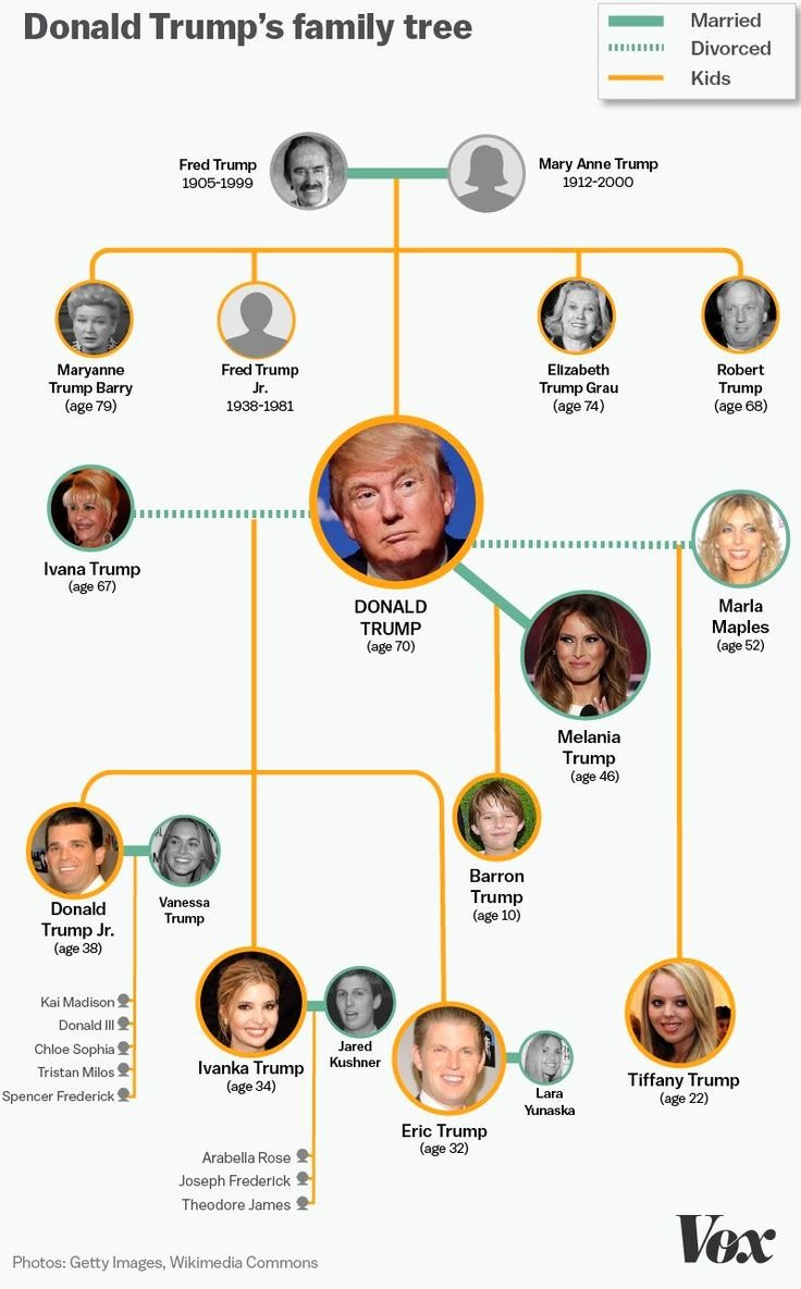 Pictures Of Family Trees Fresh the Entire Donald Trump Family Tree In One Graphic Politics and Economy
